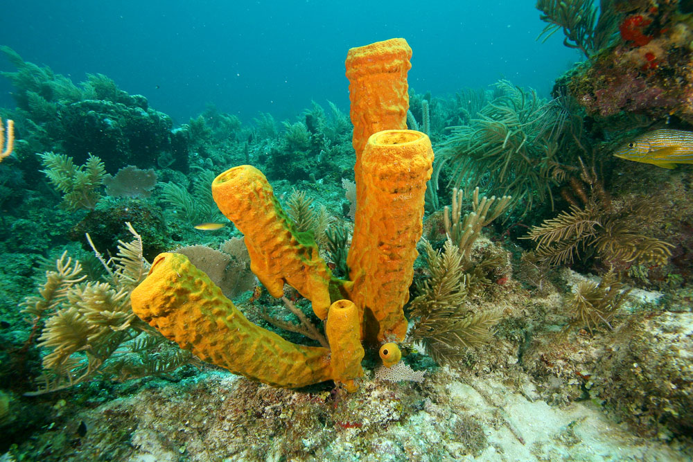 tube sponge group Belize
