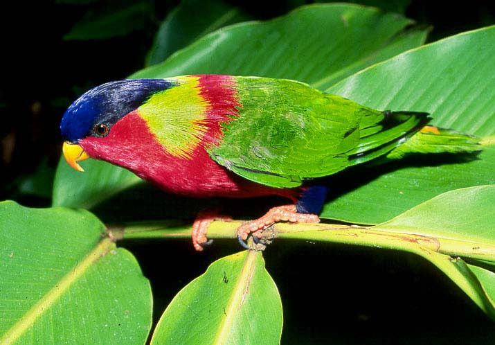 photos of rainbow colors parrot lories nests