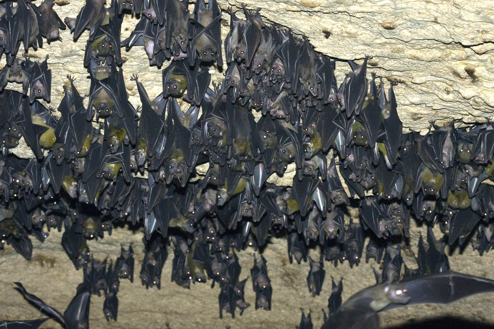 bat cave women Women's clothing store bat cave mason tx the eckert james river bat cave preserve is one of the largest bat nurseries in the country.